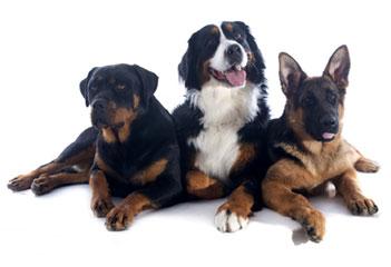 gruppo-3-cani